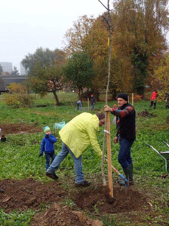 Bepflanzung Obstgarten