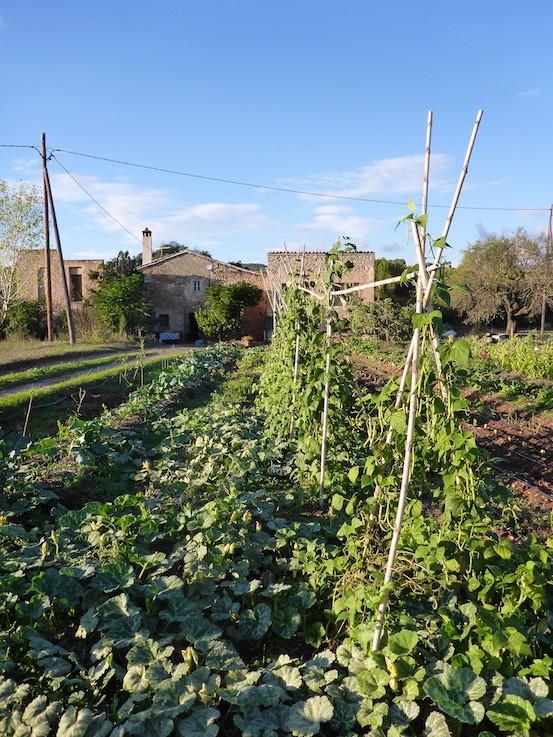 Gemüsebau in Spanien
