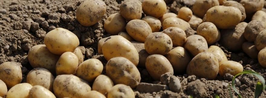 The Veg Cooperative: The Summer Harvest